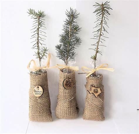 Best 25 Tree Seedlings Ideas On Pinterest Funeral Ts