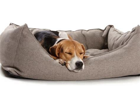Hundebett für große Hunde, Hundebett XXL, beige Baumwolle