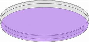 The gallery for --> Petri Dish Drawing