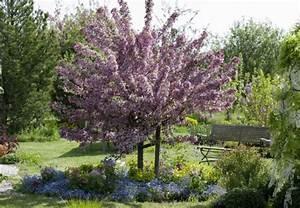 Baum Vorgarten Immergrün : baum pflanzen in 6 schritten obi ratgeber ~ Michelbontemps.com Haus und Dekorationen