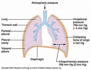 Respiratory Flashcards