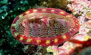 Mollusca - Wikipedia  Phylum