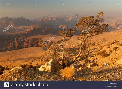 mountains middle east landscape desert highlands tree stock royalty free