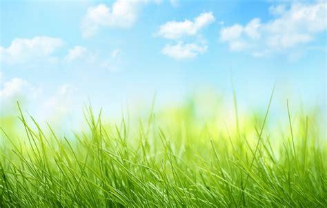 oboi nebo oblaka priroda grass travka sky nature