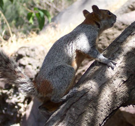 advantages  professional squirrel removal