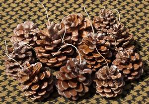 uses, for, pine, cones
