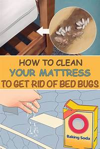 How to clean bed bugs 28 images bed bug treatment for Dry cleaning kill bed bugs