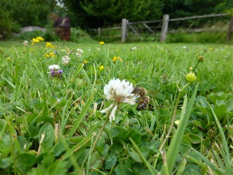 Wild Flower Lawns & Meadows