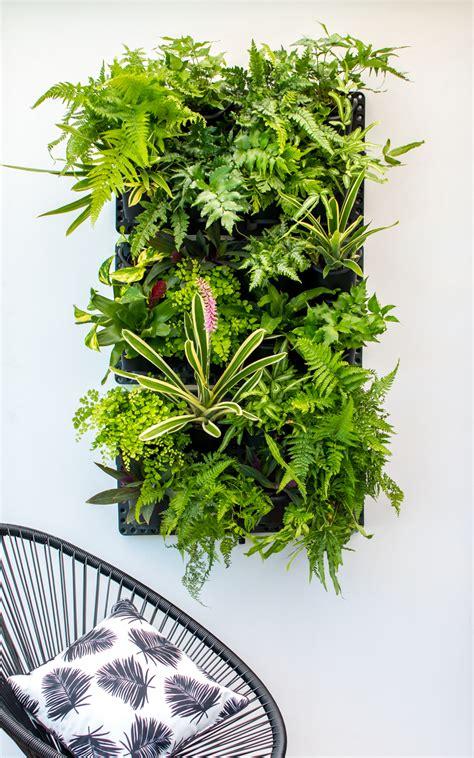 Vertical Garden Planting Panel by Greenwall Vertical Gardening Holman Industries