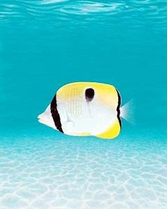 1000+ images about Tropical Art on Pinterest | Islands ...