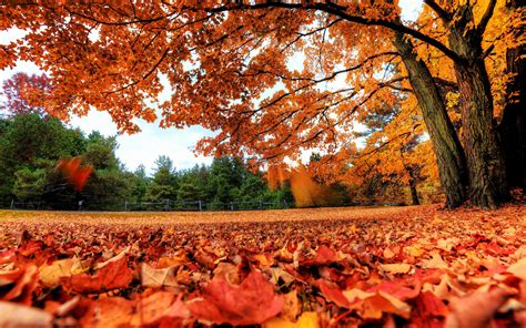 Fall Backgrounds Free Download   PixelsTalk.Net