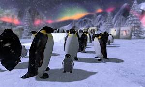 March Of The Penguins With The Northern Lights