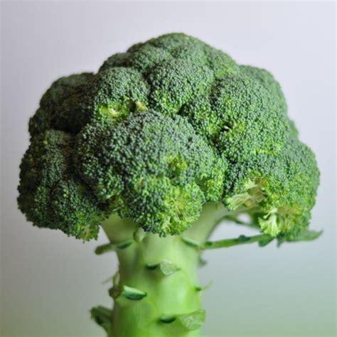 cuisine brocolis brocolis recettes faciles