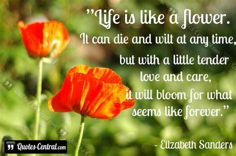 quotes  life  flowers quotesgram