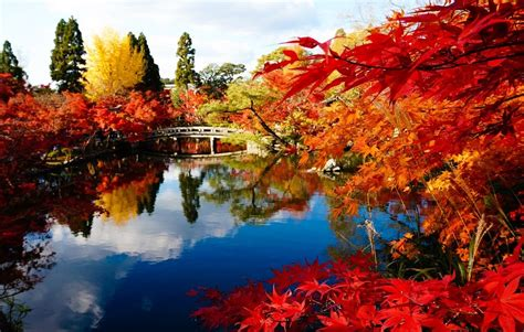 Kyoto Autumn Leaf Walking Tour