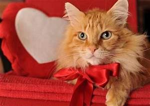 32 best images about Valentine's Cats on Pinterest | Cat ...