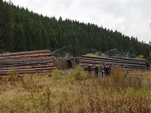 Kubikmeter Berechnen Holz : alarm im wald auch 2019 droht wieder eine borkenk fer plage ~ Yasmunasinghe.com Haus und Dekorationen