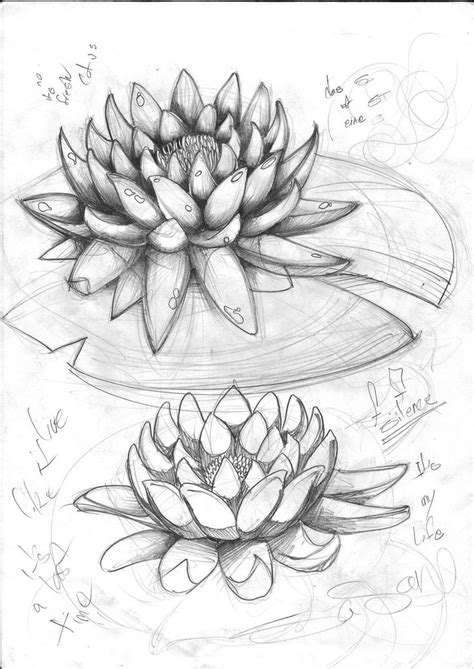 92 best images about Lotus on Pinterest | Lotus flower drawings, Lotus drawing and Lotus flowers