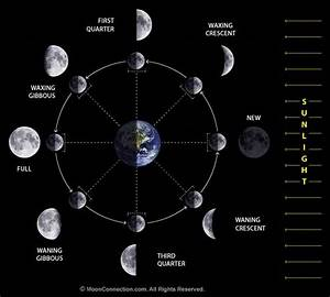 The Cool Science Dad  Lunar Phases