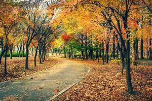 Autumn, Fall, Landscape, Nature, Tree, Forest, Leaf, Leaves, Path, Trail, Road, Wallpapers, Hd