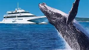 Tangalooma Whale Watch Cruises Visit Brisbane