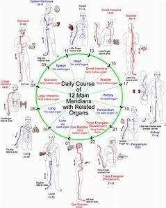 The 12 Main Meridians  U2013 The Family Healing Spot  Llc