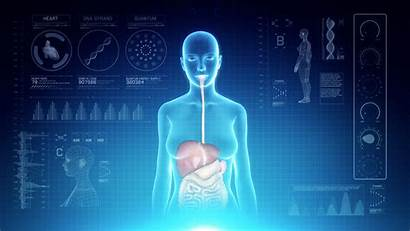 Digestive System Anatomy Female Interface Futuristic Virtual