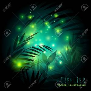 Firefly Insect Flying In Night Fireflies fireflies in ...