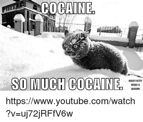 So Much Cocaine Meme - 25 best memes about so much cocain so much cocain memes