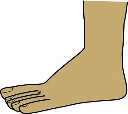 Foot Clipart Clip Cartoon Feet Clipartix Transparent
