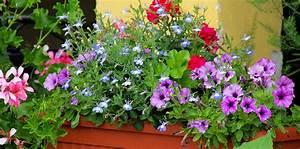 Balkonpflanzen Sonnig Pflegeleicht : balkonpflanzen abc der ratgeber rund ums thema balkonbepflanzung ~ Frokenaadalensverden.com Haus und Dekorationen