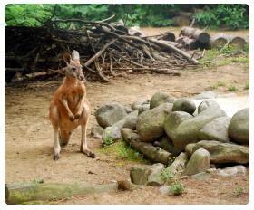ingresso zoo di pistoia pistoia zoo