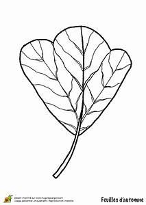 Feuilles D Automne à Imprimer : coloriage feuille de tulipier en automne ~ Nature-et-papiers.com Idées de Décoration
