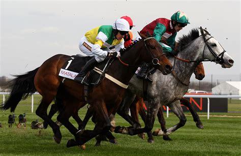 cheltenham races ladies horses