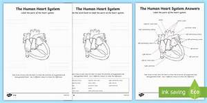 Blank Heart Diagram To Label The Human Heart