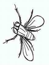 Fly Coloring Printable Colorear Dibujos Mosca Imprimir Gratis sketch template