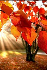 best fall screensavers ideas and images on bing find what you ll
