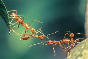 Ameisen Im Winter Finden : sch dlingsbek mpfung paletta ameisen ~ Lizthompson.info Haus und Dekorationen