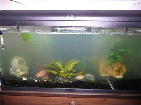 eau d aquarium trouble probl 232 me d eau trouble
