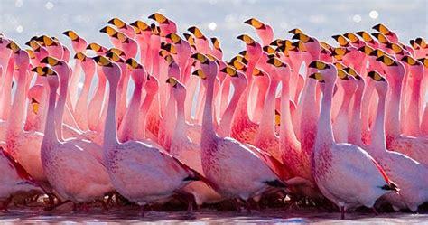 flamingo facts  garden  eaden