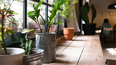 interesting plants to grow growing plants for fun and profit