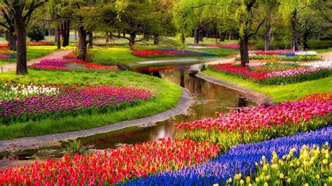 1920x1080 beautiful tulips garden 1920x1080 spring beautiful garden tulip flowers spring wallpaper