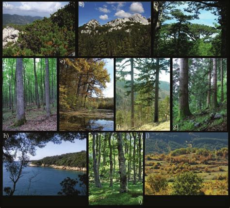 Main vegetation types of forests with dominant tree