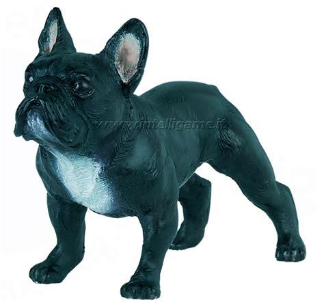 cerco in regalo cerco bulldog francese in regalo petpassion