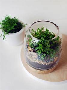 How to Make Terrarium: 18 Great DIY Ideas - Style Motivation