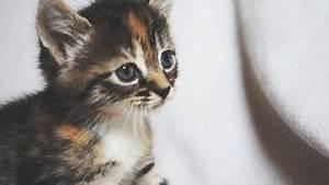 cat gif on Tumblr