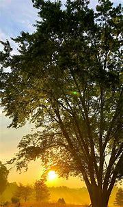 Sunrise Phone Wallpaper [1080x2340] - 002