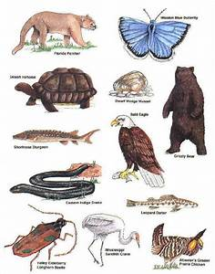 26 best images about Endangered Species on Pinterest | The ...