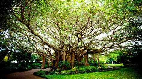 cypress gardens celebrates  years   florida charm