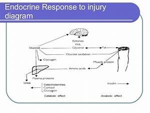 Endocrine Response